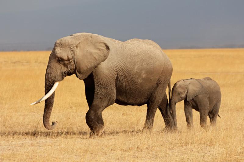Биологи говорят о начале шестого массового вымирания на Земле