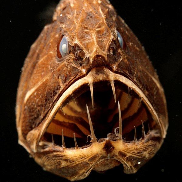 Океан, климат, вода, биология, природа, животные, фауна, эволюция, здоровье, 10 самых жутких глубоководных тварей