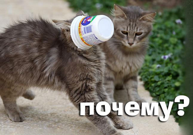 коты, математика, эксперимент, память, Как мёртвый кот помог запомнить грамматику?