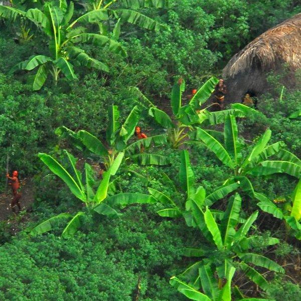 История, археология, В джунглях Амазонки обнаружено неизвестное племя